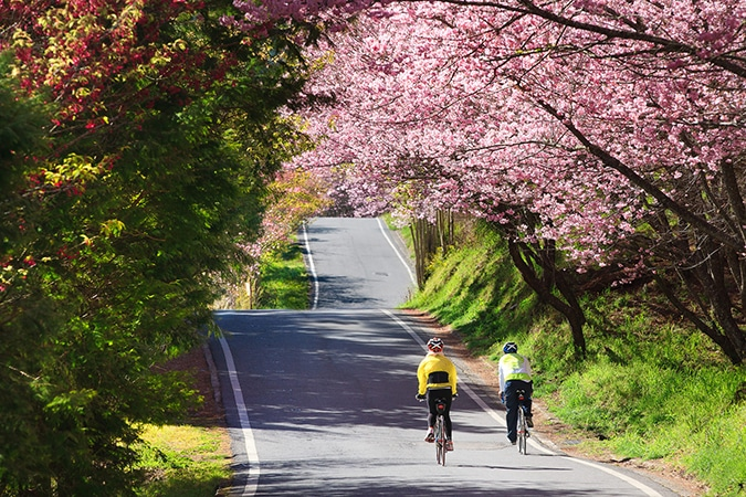 Hot Springs National Park Road Bike Tour with Escape Adventures